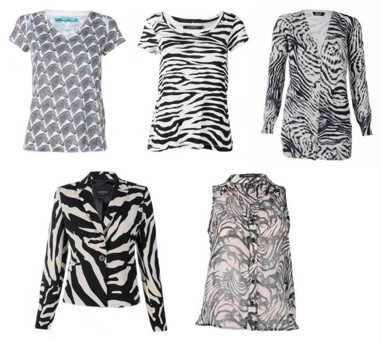 zebra 11